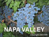 Napa Valley CA Grapes Gifts