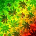 Marijuana Cannabis Leaves Pattern