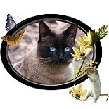 Purrfect Siamese Cat Lover Gifts