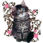 Cute Blue-eyed Tabby Cat