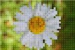 Pixel Daisy Cat Forsley Designs