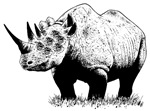 Rhino Chimera