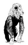 LionMonkey Chimera