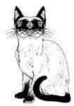 Kitty2 Chimera