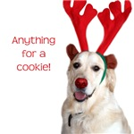 Golden Retriever - Anything for a cookie