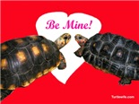 Be Mine! Redfoot Tortoises