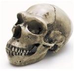 Caveman Skull #1