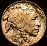 Indian Head Nickel on Black