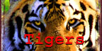 PAWS - Tiger Merchandise