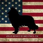 Patriotic Rough Collie