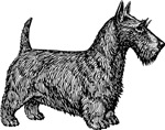 Scottish Terrier T-Shirts