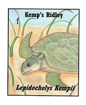 SEA TURTLE - KEMP'S RIDLEY