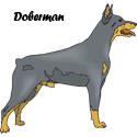 Doberman T-shirts, Doberman T-shirt