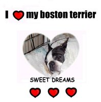 SWEETDREAMS (BOSTON TERRIER)