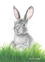 Bunny Rabbit by Marc Brinkerhoff
