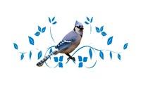 <b>REGAL BLUE JAY</b>