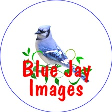 <b>BLUE JAY LOVER GIFTS</b>