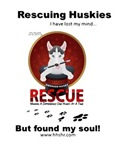 Rescueing Huskies