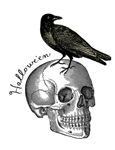 Halloween Raven Skull