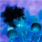 effect flower-more versions
