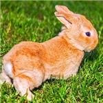 bunny, Rabbit, easter,
