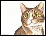 Mitzy the Tabby Cat