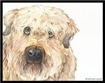 Riley the Wheaton Terrier
