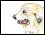 Thorin the Great Pyrenees
