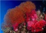 Underwater Scenics