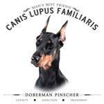 Man's Best Friend - Doberman