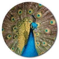 Peacock merchandise