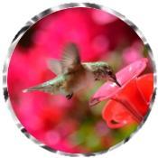 Hummingbird 3230