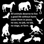 No Harm to Animals