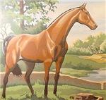 Antebellum Stallion