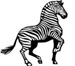 Zebra Symbol