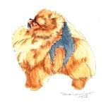 Pomeranian Art 2016