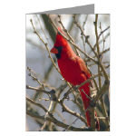 Wildlife and Nature Cards
