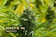 Joseph OG (with name)