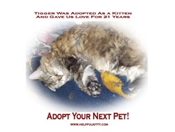 Spay, Neuter, and Adopt