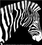 Zebra portrait R neg.