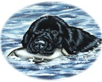 Newfoundland Bumper Dog