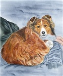 Sheltie Lap Dog