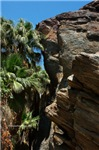 Palms kissing Cliff