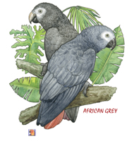 Tropical African Greys