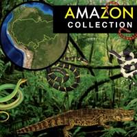 Amazon Rainforest Collection