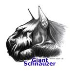 Giant Schnauzer Head resting