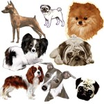 toy group,dog art includes holiday themes