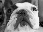 Louie's cute face