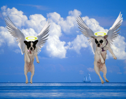 Perfect Angels