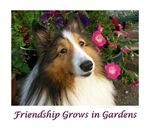 Friendship Grows in Gardens